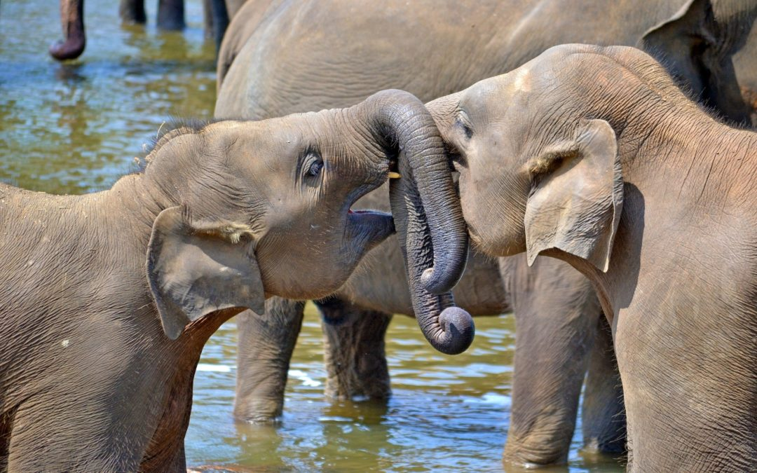 Udawalawe National Park Safari, Sri Lanka
