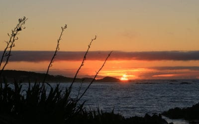 Discover the Chatham Islands