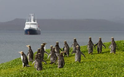 Forgotten Islands of the South Pacific, the Subantarctic Islands