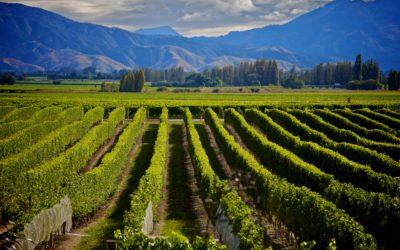 Marlborough Sounds – 6 Day Luxury Small-Group Wine Tour